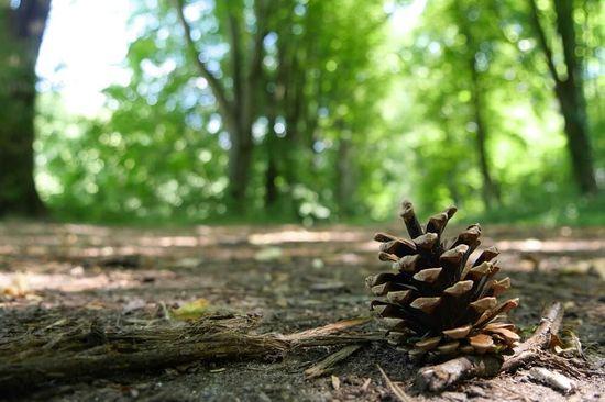 Ballade en forêt sophrologie