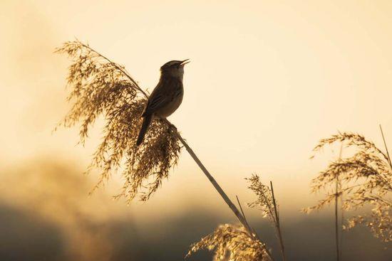Entendre les oiseaux chanter sophrologie